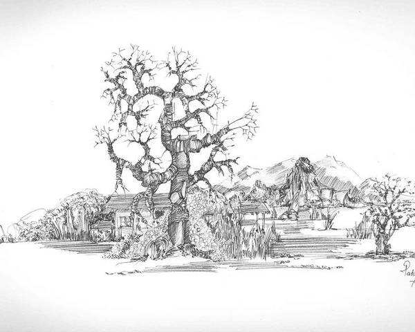 Landscape Poster featuring the drawing Tree And Some Rocks by Padamvir Singh