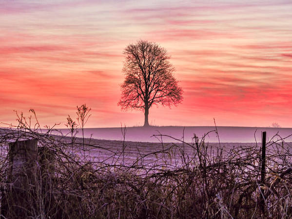 Tree Poster featuring the photograph Tree At Sunrise Eaton Rapids by Joe Holley