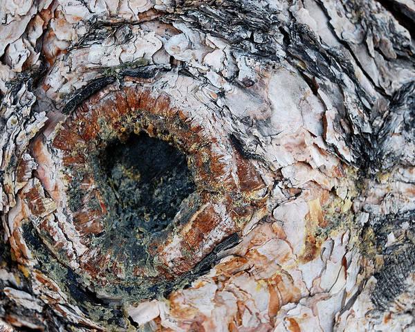 Tree Bark Poster featuring the photograph Tree Bark by Apurva Madia