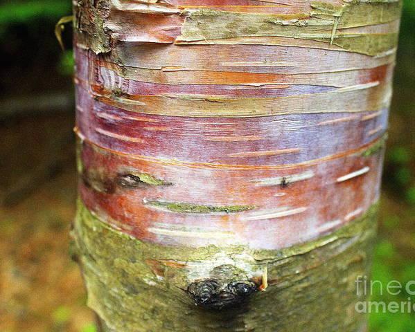 Tree Poster featuring the photograph Tree Bark by Samiksa Art