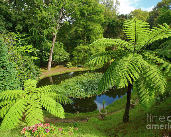 Tree Ferns Poster featuring the photograph Tree Ferns by Gaspar Avila