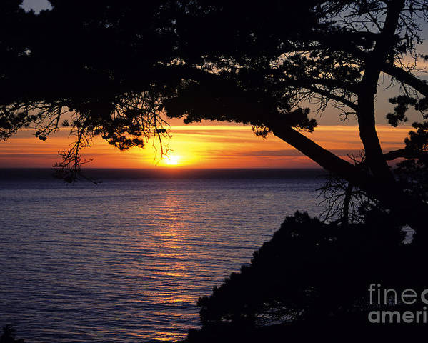 Ali O Neal Poster featuring the photograph Tree Framing Seascape Sunset by Ali ONeal - Printscapes