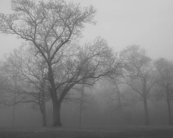 Tree Poster featuring the photograph Tree In Black And White by James Jones
