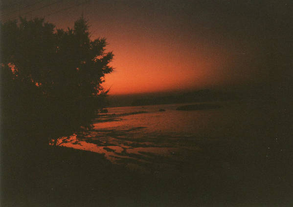Tree In Sunset Poster featuring the photograph Tree In Sunset by Catt Kyriacou