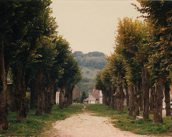 Trees Poster featuring the photograph Tree Lined Pathway In Lyon France by Nancy Mueller