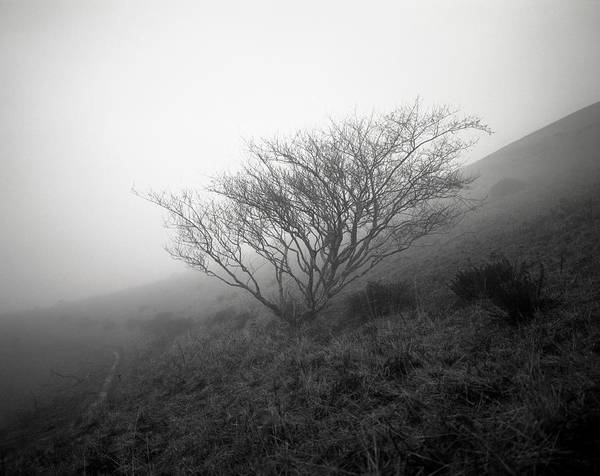 Nature Poster featuring the photograph Tree Mist by Benjamin Garvey