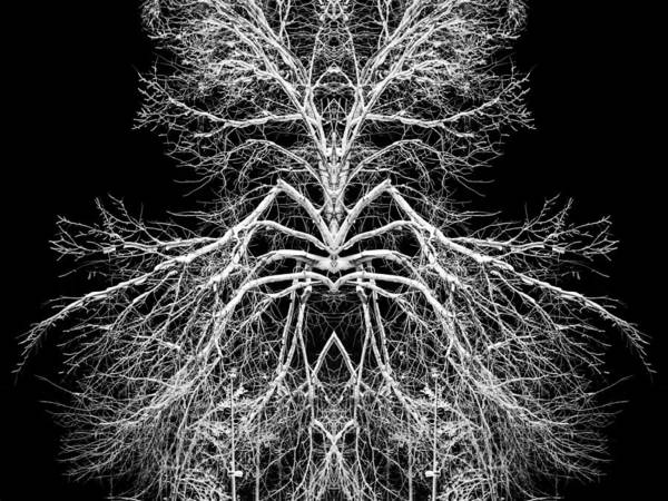 Tree Poster featuring the photograph Tree Of Nature Evolving Symmetry Pattern by John Williams