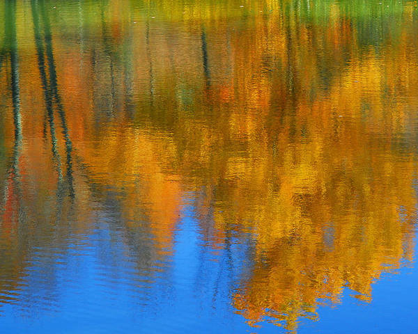 Fall Color Poster featuring the photograph Tree Reflection 'painting' by Alan Lenk