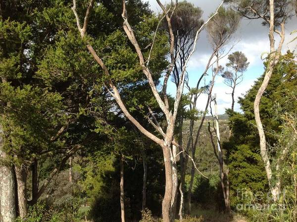 Trees Poster featuring the photograph Tree Tops And Beyond by Karen Moren