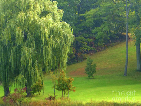Trees Poster featuring the photograph Trees Along Hill by Rockin Docks Deluxephotos