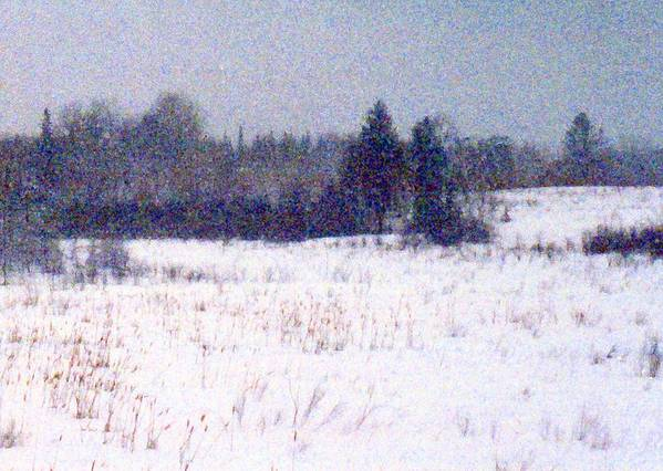 Snow Poster featuring the photograph Trees By The Snow Field Ae by Lyle Crump