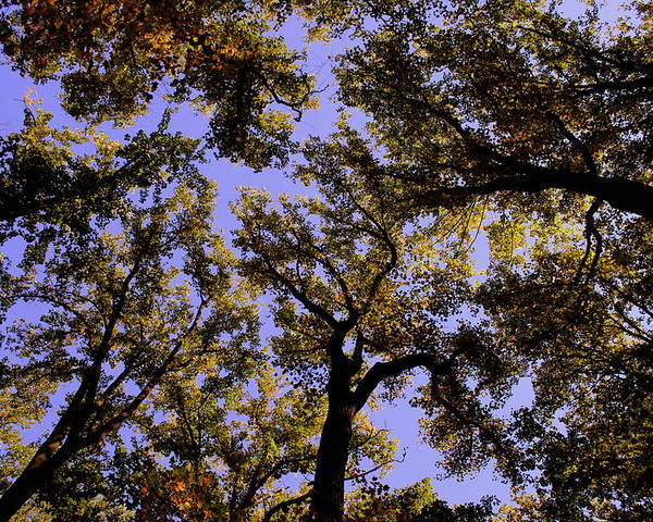 Trees Poster featuring the photograph Trees Conversing by Deborah Crew-Johnson