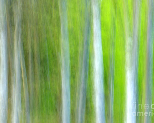 Trees Poster featuring the photograph Trees by Silke Magino