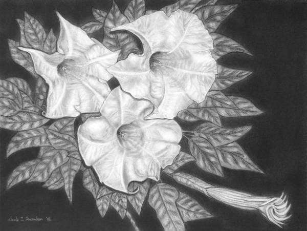 Flowers Poster featuring the drawing Trio Of Heavenly Blossoms by Nicole I Hamilton