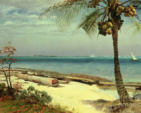 Shore; Exotic; Palm Tree; Coconut; Sand; Beach; Sailing Poster featuring the painting Tropical Coast by Albert Bierstadt