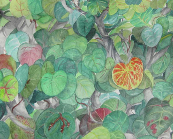 Plants Poster featuring the painting Tropical Leaves by Judy Riggenbach
