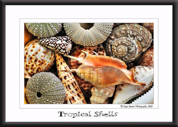 Photography Poster featuring the photograph Tropical Shells... Greeting Card by Kaye Menner