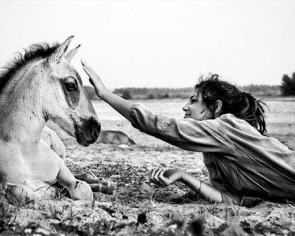 Horse Poster featuring the photograph Trustful Friendship by Justyna Lorenc