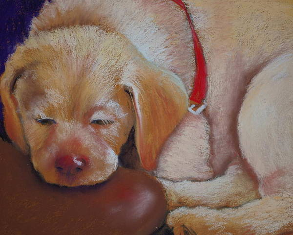 Puppy Lab Poster featuring the pastel Tuckered Out by Patricia Kerns
