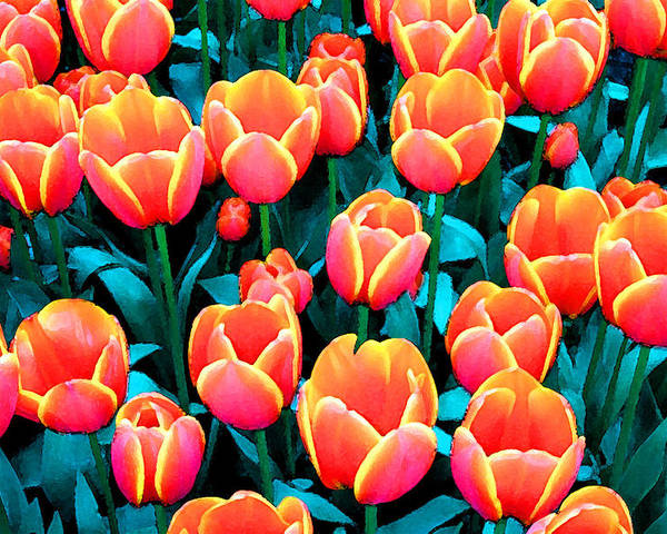 Poster featuring the photograph Tulips In Holland by Gene Sizemore