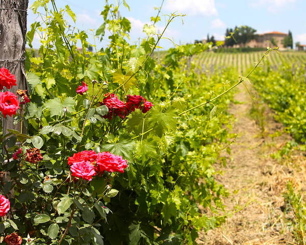 Roses Poster featuring the photograph Tuscany Villa And Roses by Nadine Rippelmeyer