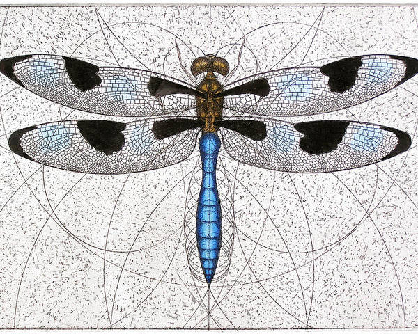 Dragonfly Poster featuring the painting Twelve Spotted Skimmer by Charles Harden