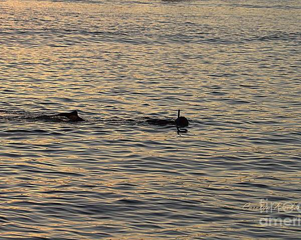 Twilight Poster featuring the photograph Twilight Snorkel 2 by Carolyn Parker