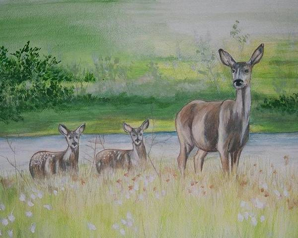 Whitetail Deer Poster featuring the painting Twins In The Quabin by Debra Sandstrom