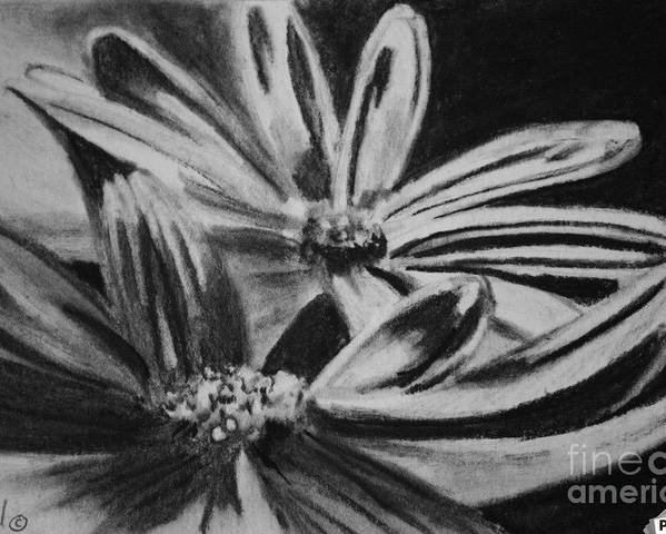 Flowers Poster featuring the drawing Two Flowers by Regan J Smith