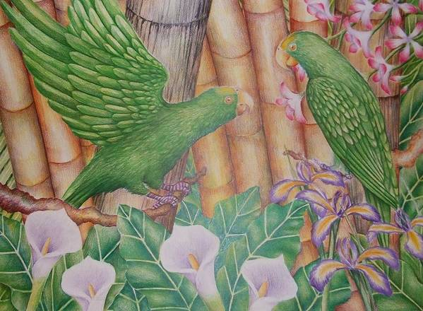 Landscape Poster featuring the drawing Two Perrots by Jubamo