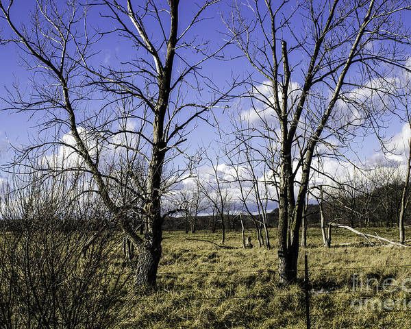 Blue Poster featuring the photograph Two Trees Of Blue by Doug Daniels