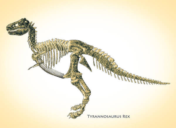 Biology Poster featuring the digital art Tyrannosaurus Rex Skeleton by Bob Orsillo