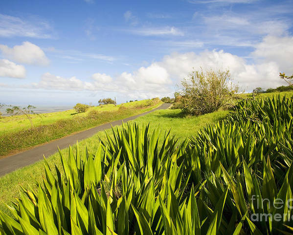 Afternoon Poster featuring the photograph Ulupalakua Country Road by Ron Dahlquist - Printscapes