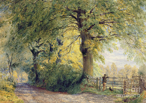 Under The Beeches (oil On Canvas) By John Steeple (1823-1887) Poster featuring the painting Under The Beeches by John Steeple