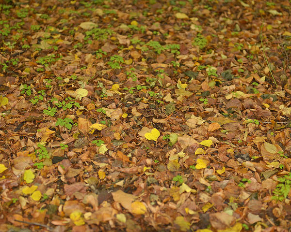 Carpet Poster featuring the photograph Undergrowth, Leaves Carpet. by Adriano Bussi