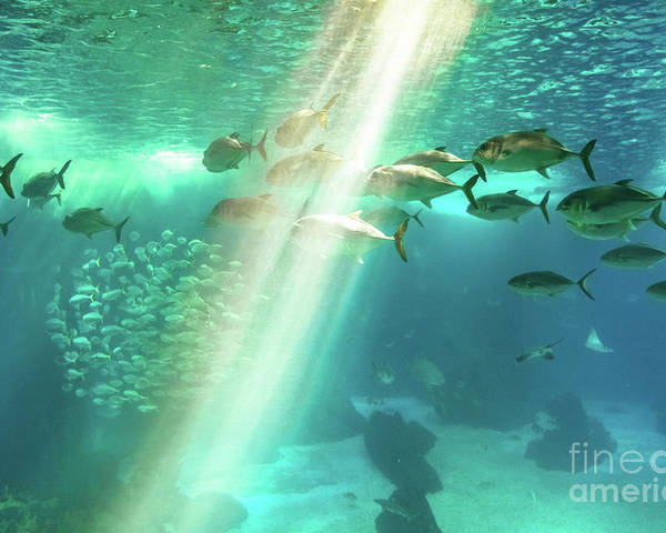 Underwater Poster featuring the photograph Underwater Background With Sunbeams by Benny Marty