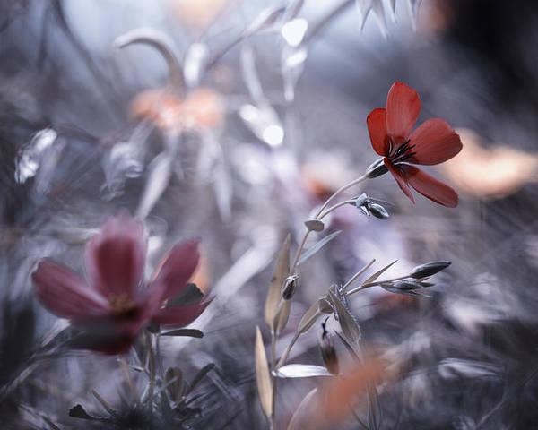 Flower Poster featuring the photograph Une Fleur, Une Histoire by Fabien Bravin