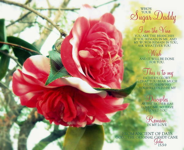 Floral Poster featuring the photograph United W/ The Vine Sugar Daddy by Karen Jbon Lee