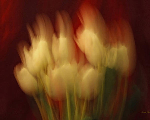 Tulips Poster featuring the photograph Up In Flames by Donna Blackhall