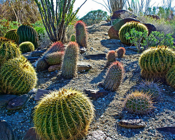 Variety Of Desert Plants In Living Desert Zoo And Gardens In Palm