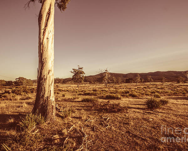 Tree Poster featuring the photograph Vast Pastoral Australian Countryside by Jorgo Photography - Wall Art Gallery