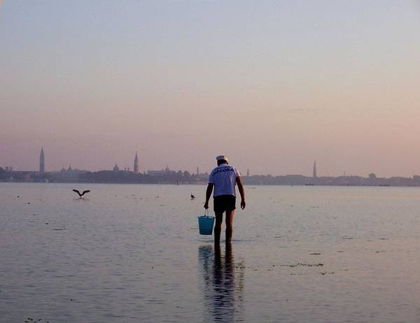 Venice Poster featuring the photograph Venetian Lagoon, Clamming by Erla Zwingle