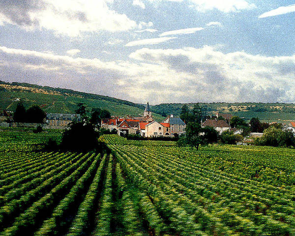 Vineyards Poster featuring the photograph Village In The Vineyards Of France by Nancy Mueller