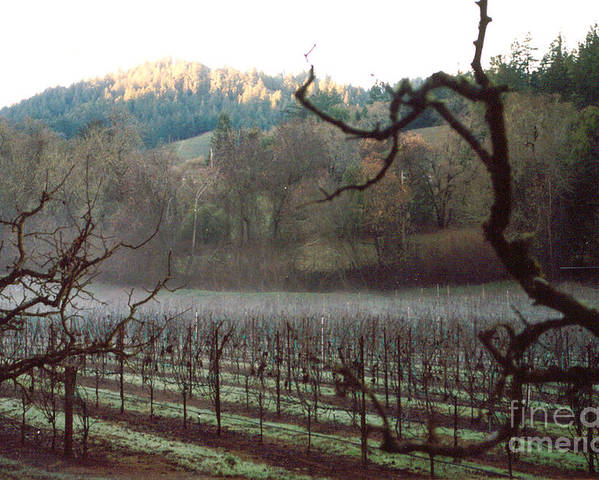 Vineyard Poster featuring the photograph Vineyard In The Winter by PJ Cloud