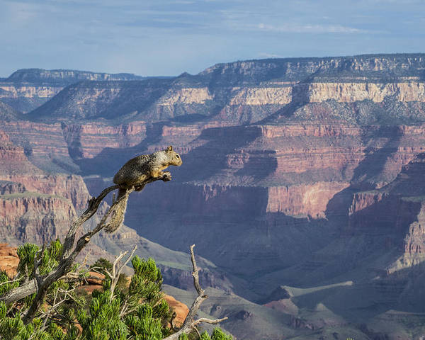 Landscape Poster featuring the photograph visit to Grand Canyon by Atul Daimari