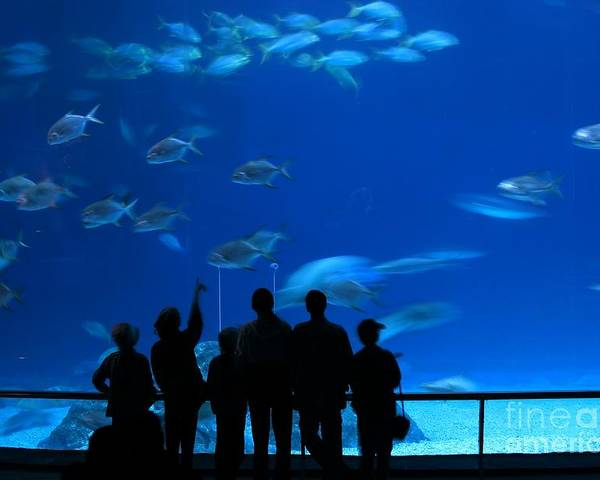 Tank Poster featuring the photograph Visitors At An Aquarium by Yali Shi
