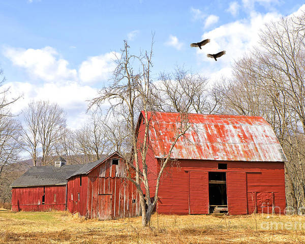Delaware Poster featuring the photograph Vultures Over Barn by Paul Fell