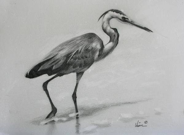 Graphite On Paper Poster featuring the drawing Wader by Michael Vires