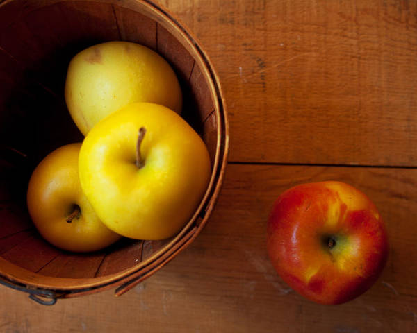 Apples Poster featuring the photograph Waiting by Toni Hopper