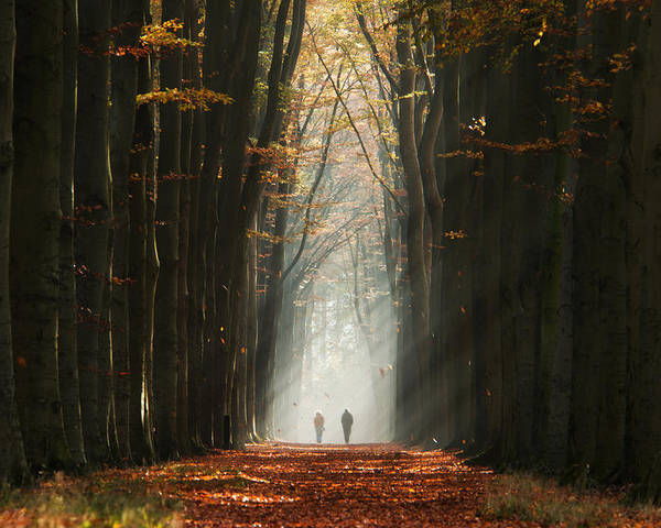 Autumn Poster featuring the photograph Walking Into The Light by Martin Podt